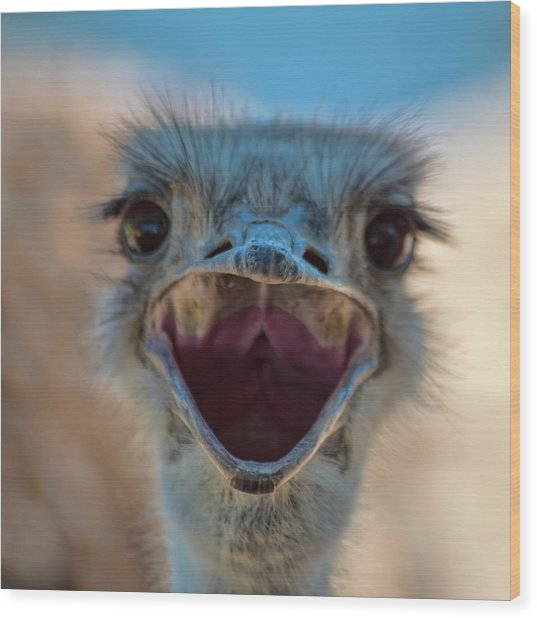 Wood Print featuring the photograph Ostrich Big Mouth by Dan McManus