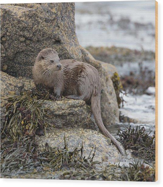 Otter Beside Loch Wood Print