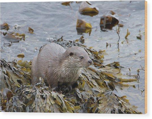 Otter On Seaweed Wood Print