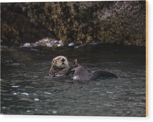 Otter Playing In The Bay Wood Print