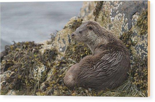 Otter Relaxing On Rocks Wood Print