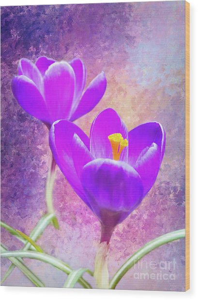 Our First Crocuses This Spring Wood Print