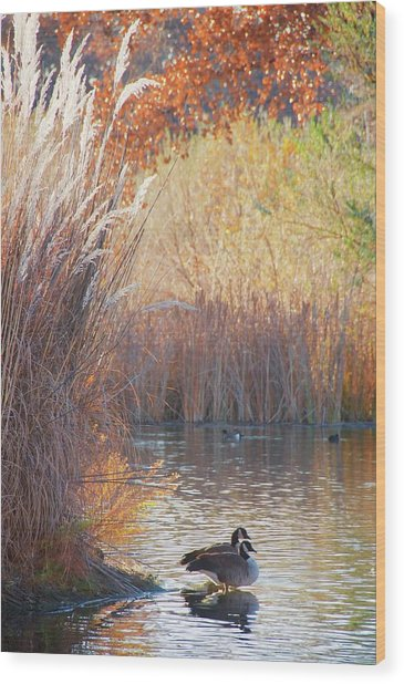 Sanctuary, Canadian Geese Wood Print