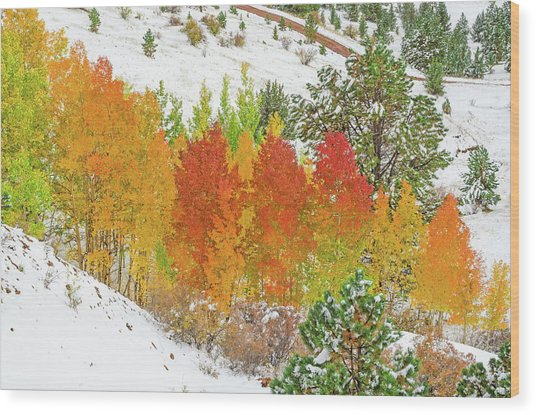 Our Winter Begins Around Mid October.  Wood Print