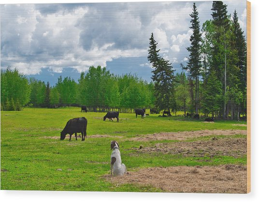 Out In The Pasture Wood Print