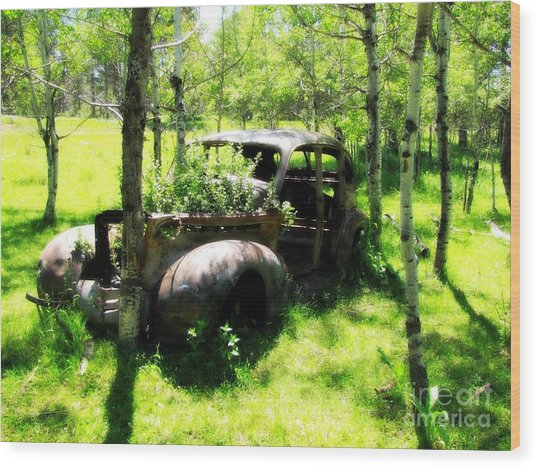Out To Pasture Wood Print