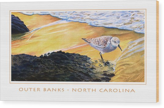 Outer Banks Sanderling Wood Print by Bob Nolin