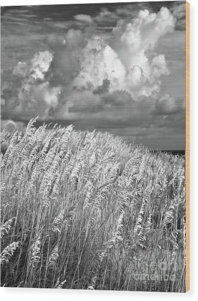 Outer Banks - Sea Oats Swaying In A Storm Bw Wood Print by Dan Carmichael