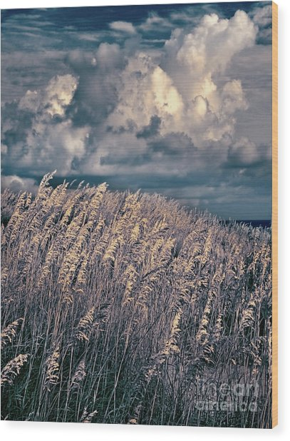 Outer Banks - Sea Oats Swaying In A Storm Fx Wood Print by Dan Carmichael