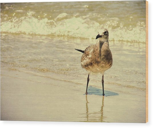Outerbanks Gull Wood Print by JAMART Photography