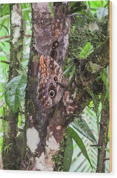 Owl Butterfly On A Tree Wood Print