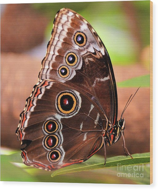 Owl Butterfly Portrait Wood Print