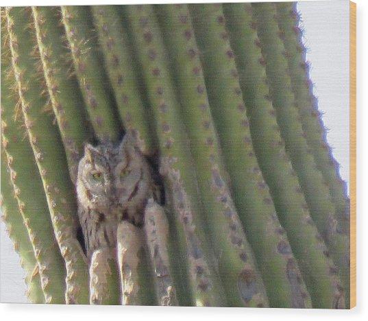 Owl In Cactus Burrow Wood Print