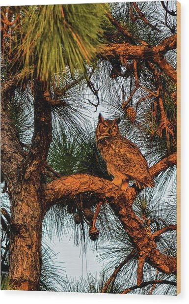 Owl In The Very Last Sunset Light Wood Print