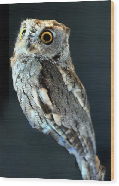 Owl On Black Wood Print by Michael Riley