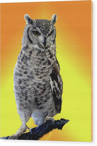 Owl On Branch Wood Print by Michael Riley