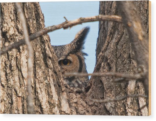 Owl Peek Wood Print