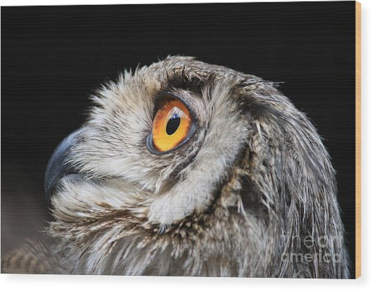 Owl The Grand-duc Wood Print