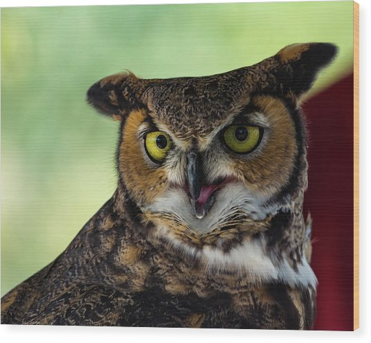 Owl Tongue Wood Print