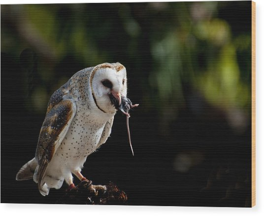 Owl Versus Mouse Wood Print