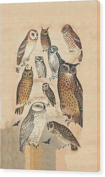 Owls Wood Print