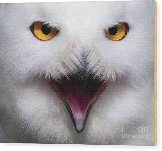 Owlsome Wood Print