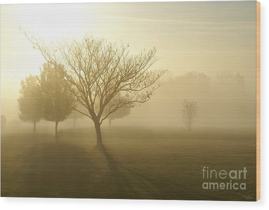 Ozarks Misty Golden Morning Sunrise Wood Print