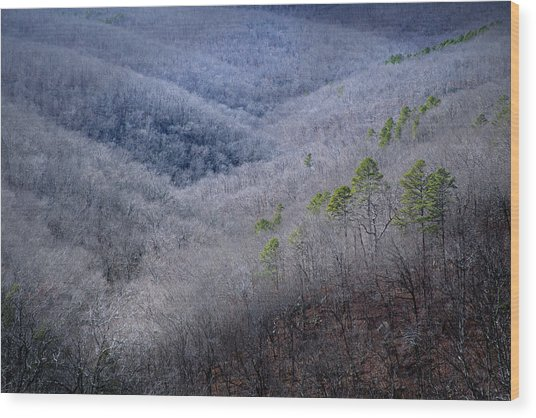 Ozarks Trees #4 Wood Print