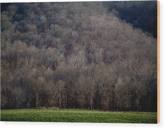 Ozarks Trees Wood Print