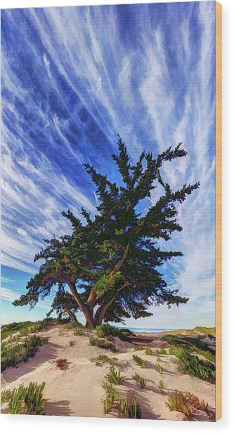 Pacific Beach Juniper Wood Print