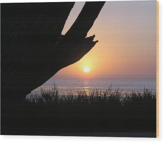 Pacific Cypress Sunset Wood Print by Richard Mansfield