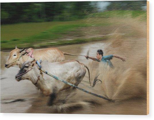 Pacu Jawi Bull Race Festival Wood Print