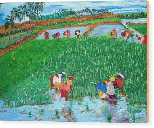 Paddy Planters Wood Print by Narayan Iyer