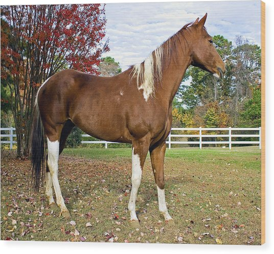 Paint Horse Wood Print