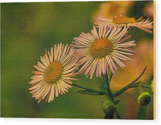 Painted Daisies 2 Wood Print