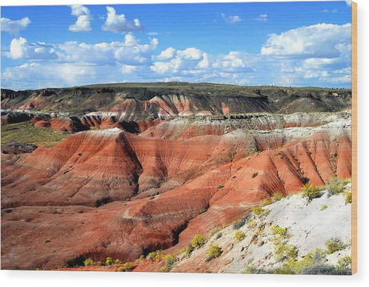 Painted Desert Wood Print by Barry Shaffer