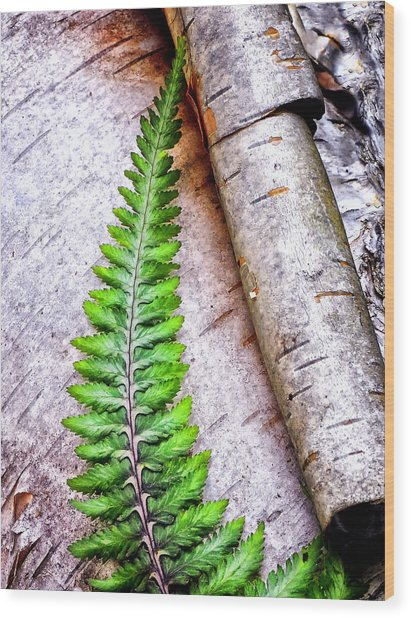 Painted Fern By Birch Wood Print