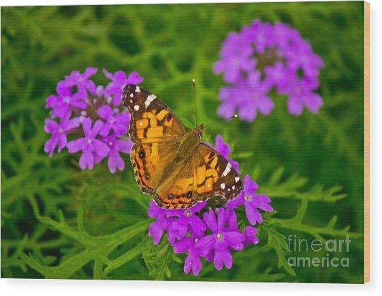 Painted Lady On Purple Verbena Wood Print