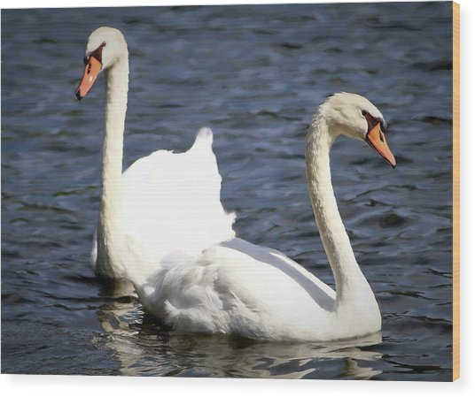 Painted Mute Swans Of Lake Junaluska North Carolina II Wood Print