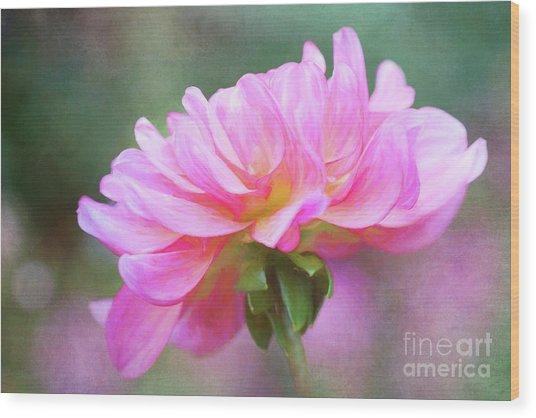 Painted Pink Dahlia Wood Print