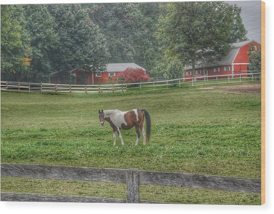 1005 - Painted Pony In Pasture Wood Print