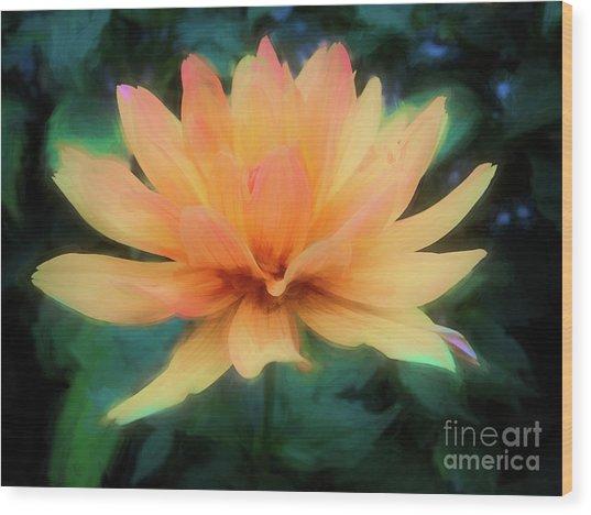 Painted Tangerine Dahlia Wood Print