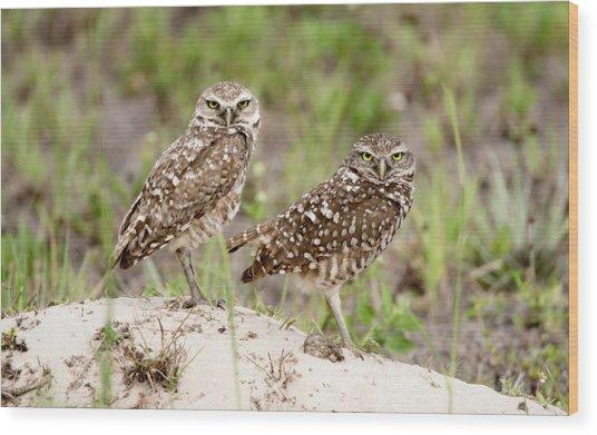 Pair Of Burrowing Owls Wood Print