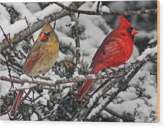 Pair Of Cardinals In Winter Wood Print