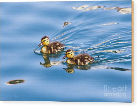Duckling Duo Wood Print