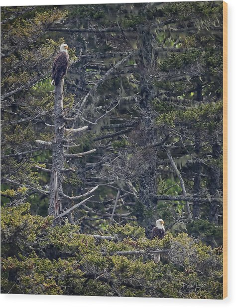 Wood Print featuring the photograph Pair Of Eagles by David A Lane
