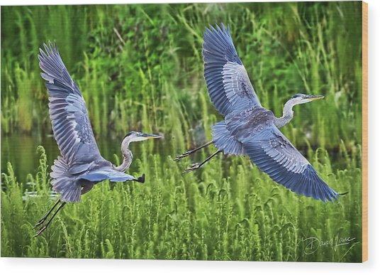 Pair Of Great Blue Herons  Wood Print