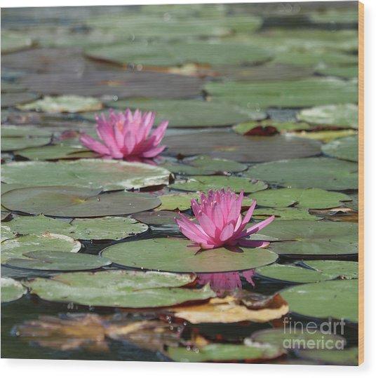 Pair Of Pink Pond Lilies Wood Print