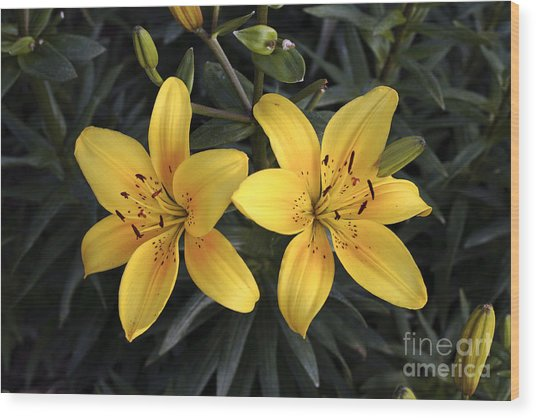 Pair Of Yellow Lilies Wood Print