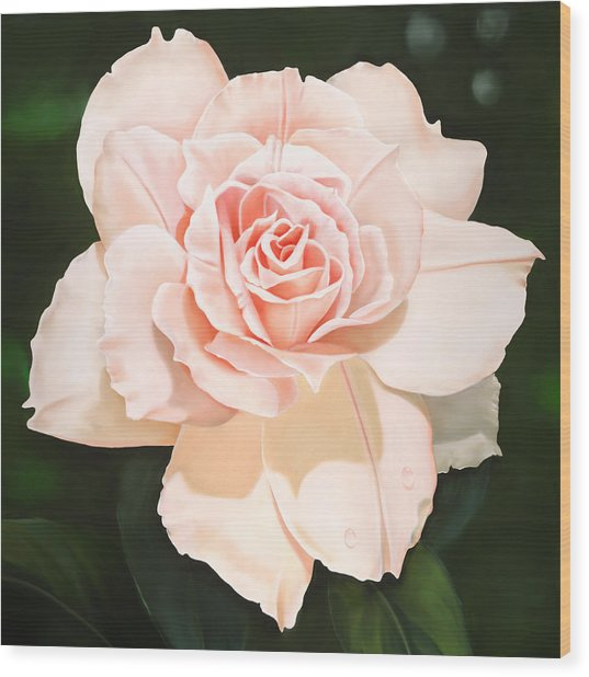 Pale Pink Rose Wood Print by Ora Sorensen